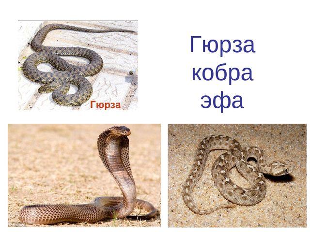 Гюрза кобра эфа