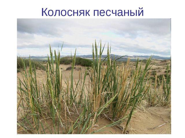 Колосняк песчаный