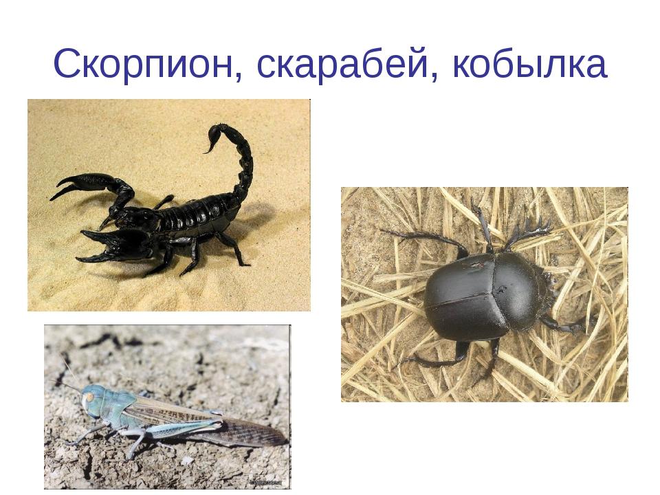 Скорпион, скарабей, кобылка