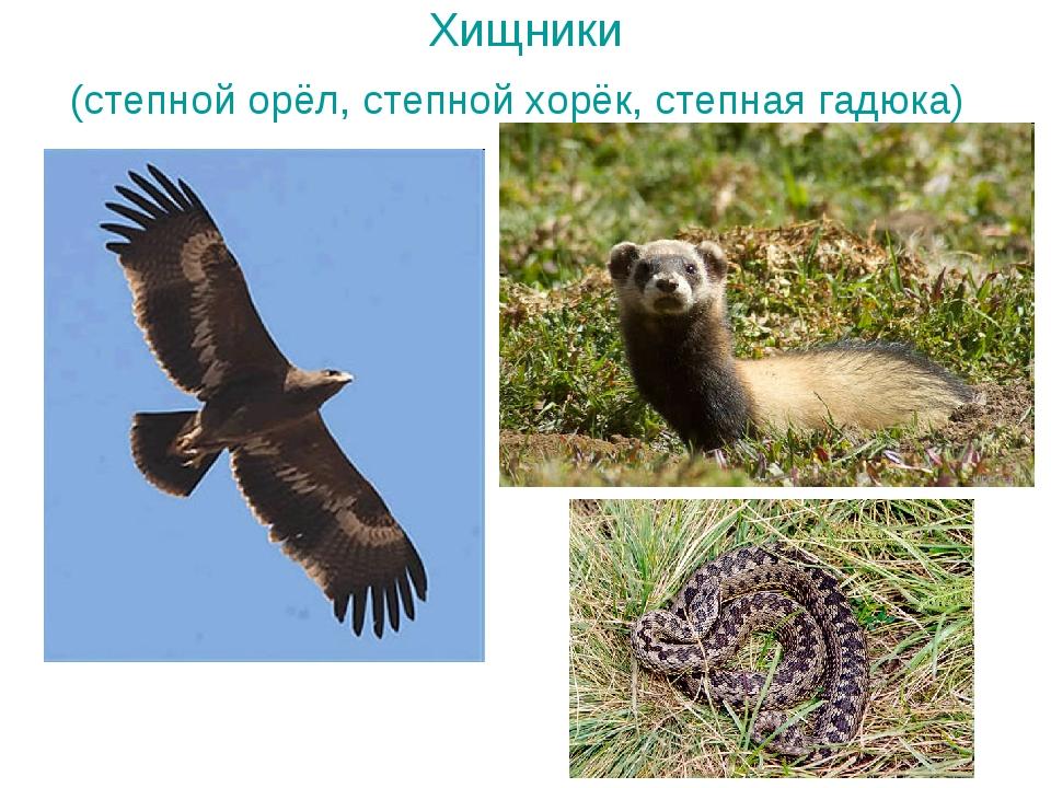 Хищники (степной орёл, степной хорёк, степная гадюка)