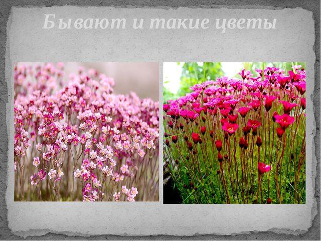 Бывают и такие цветы