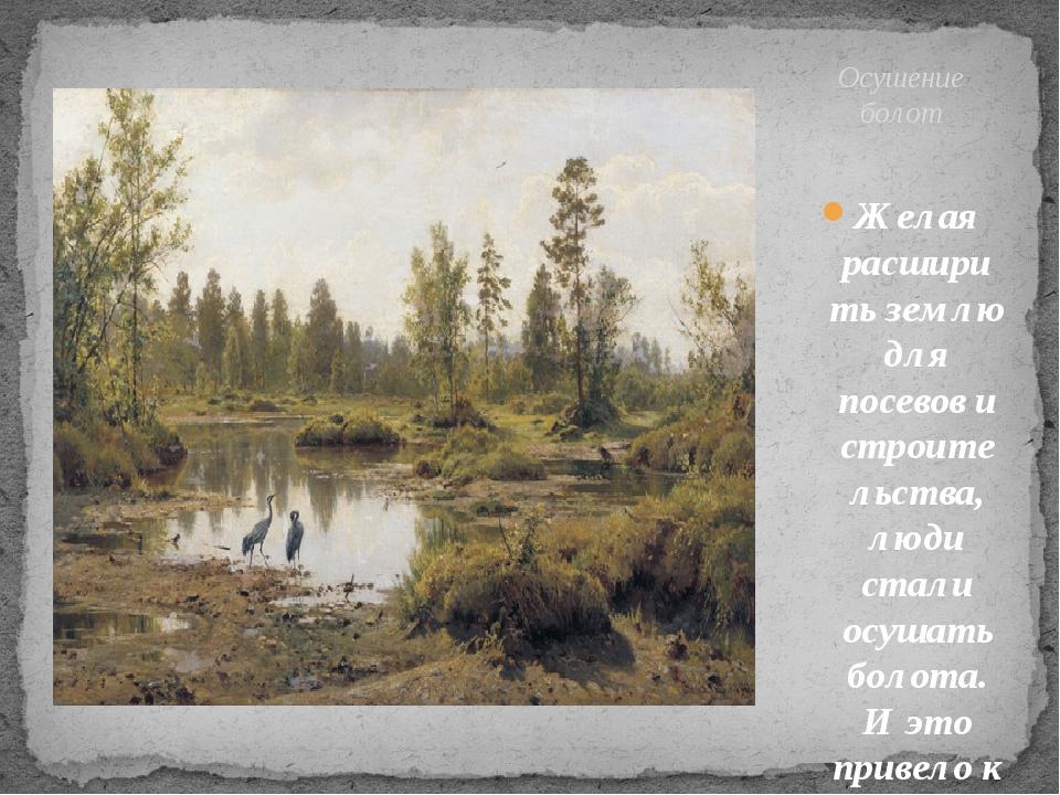 Желая расширить землю для посевов и строительства, люди стали осушать болота....