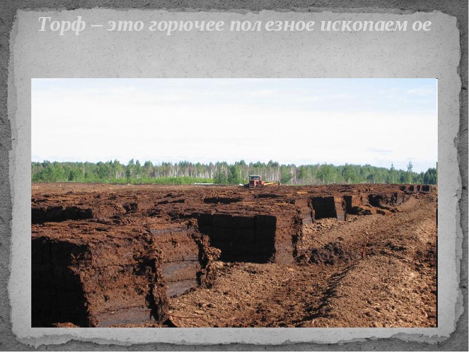 Торф – это горючее полезное ископаемое