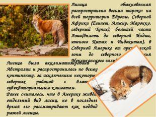 Лисица обыкновенная распространена весьма широко: на всей территории Европы,