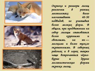 Окраска и размеры лисиц различны в разных местностях; всего насчитывают 40-50