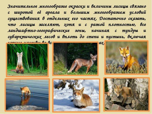 Значительное многообразие окраски и величины лисицы связано с широтой её ареа...