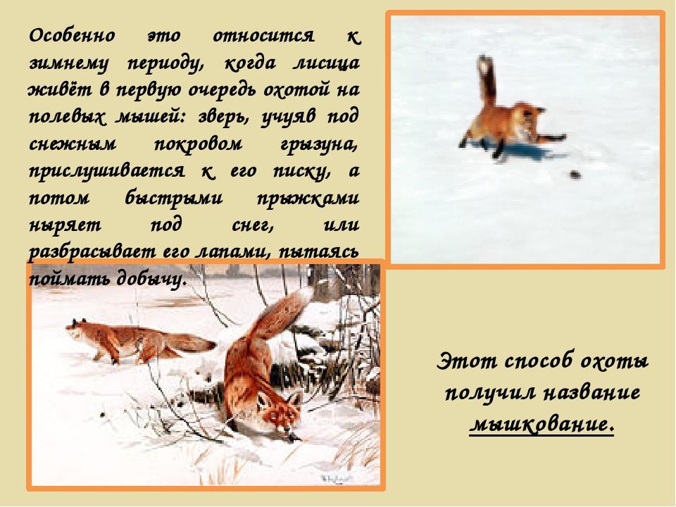 Этот способ охоты получил название мышкование. Особенно это относится к зимне...