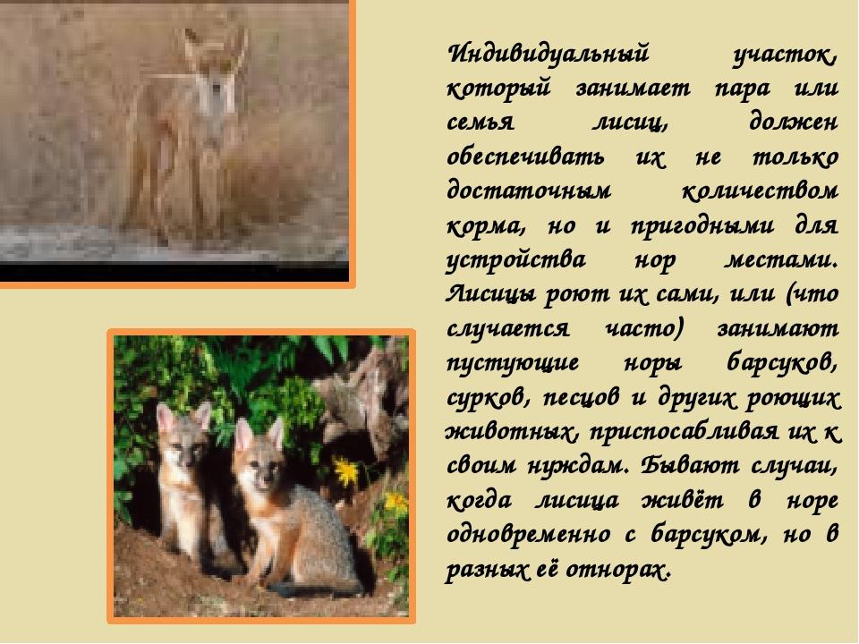 Индивидуальный участок, который занимает пара или семья лисиц, должен обеспеч...