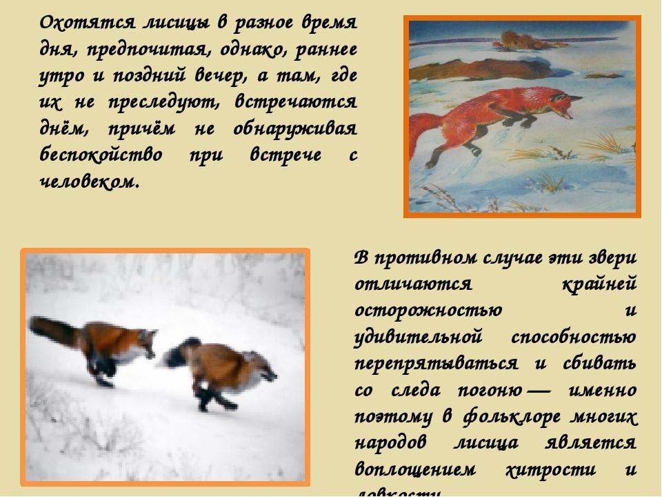 Охотятся лисицы в разное время дня, предпочитая, однако, раннее утро и поздни...