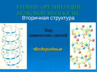 УРОВНИ ОРГАНИЗАЦИИ БЕЛКОВОЙ МОЛЕКУЛЫ Вторичная структура Вид химических связе
