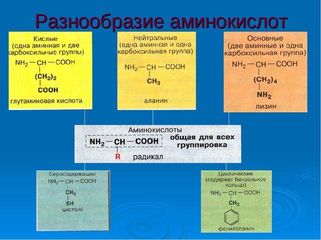 Разнообразие аминокислот