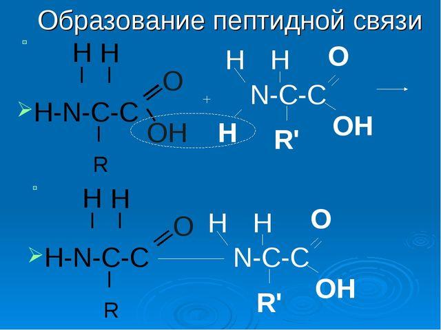 H-N-C-C Образование пептидной связи H H R О N-C-C Н Н ОН Н R' О ОН
