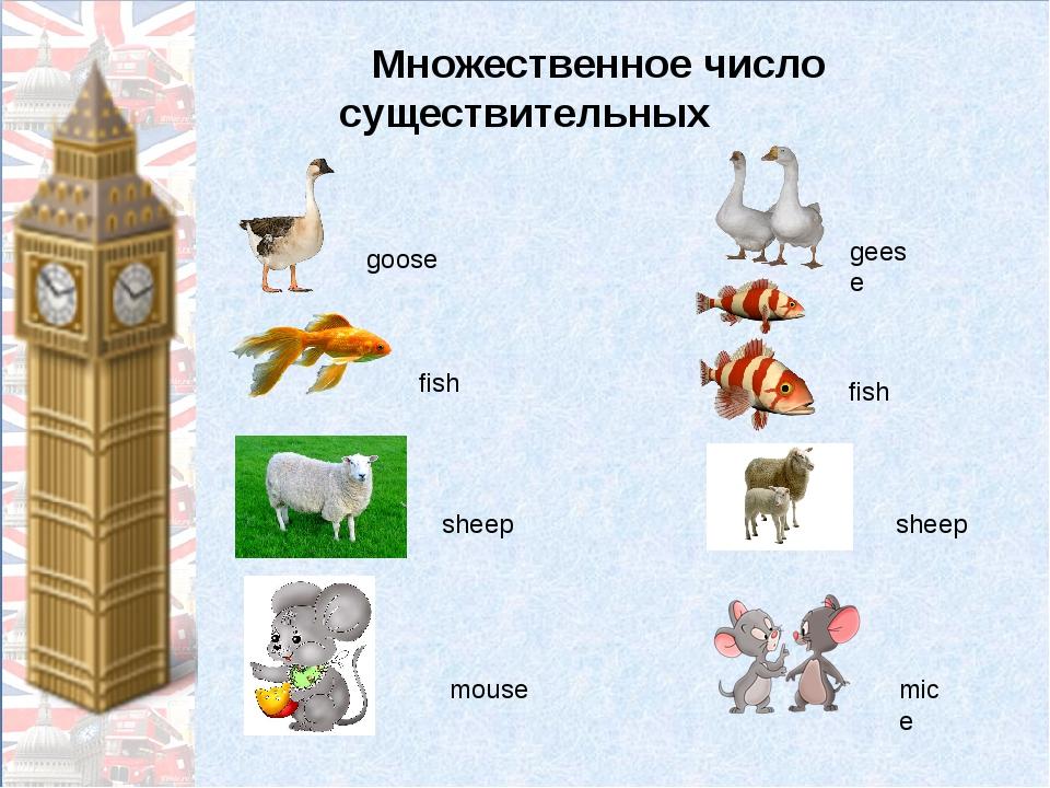 Множественное число существительных goose geese fish fish sheep sheep mouse...