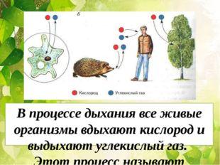 Рис 99 стр 106 В процессе дыхания все живые организмы вдыхают кислород и выды