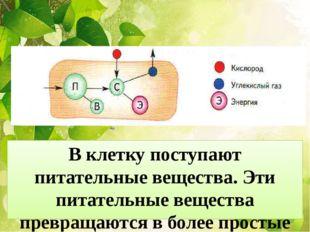 В клетку поступают питательные вещества. Эти питательные вещества превращаютс