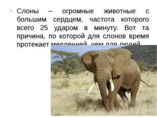 Слоны – огромные животные с большим сердцем, частота которого всего 25 ударом