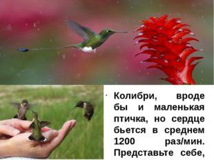 Колибри, вроде бы и маленькая птичка, но сердце бьется в среднем 1200 раз/мин
