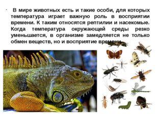 В мире животных есть и такие особи, для которых температура играет важную ро
