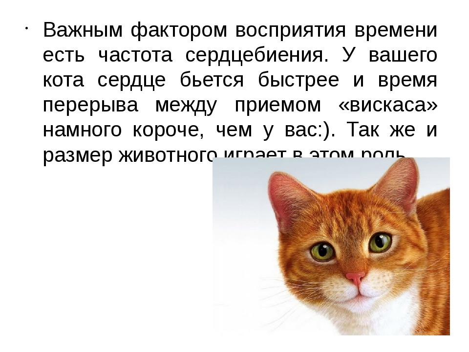 Важным фактором восприятия времени есть частота сердцебиения. У вашего кота с...