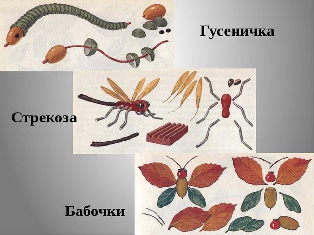 Гусеничка Стрекоза Бабочки
