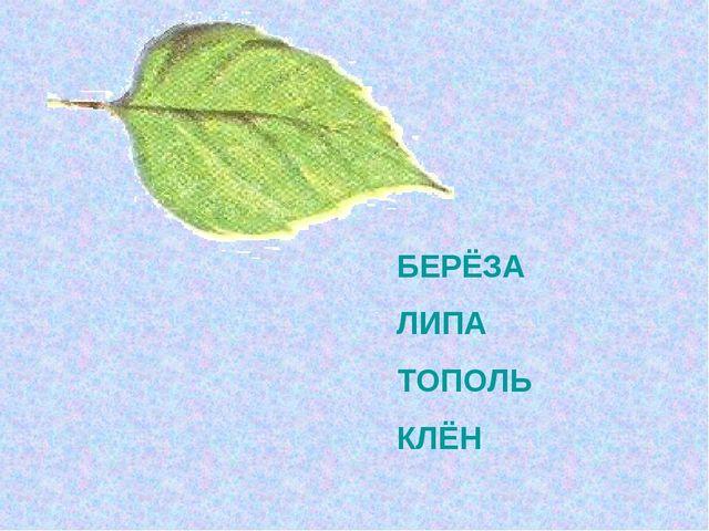 БЕРЁЗА ЛИПА ТОПОЛЬ КЛЁН