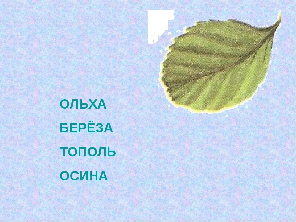 ОЛЬХА БЕРЁЗА ТОПОЛЬ ОСИНА