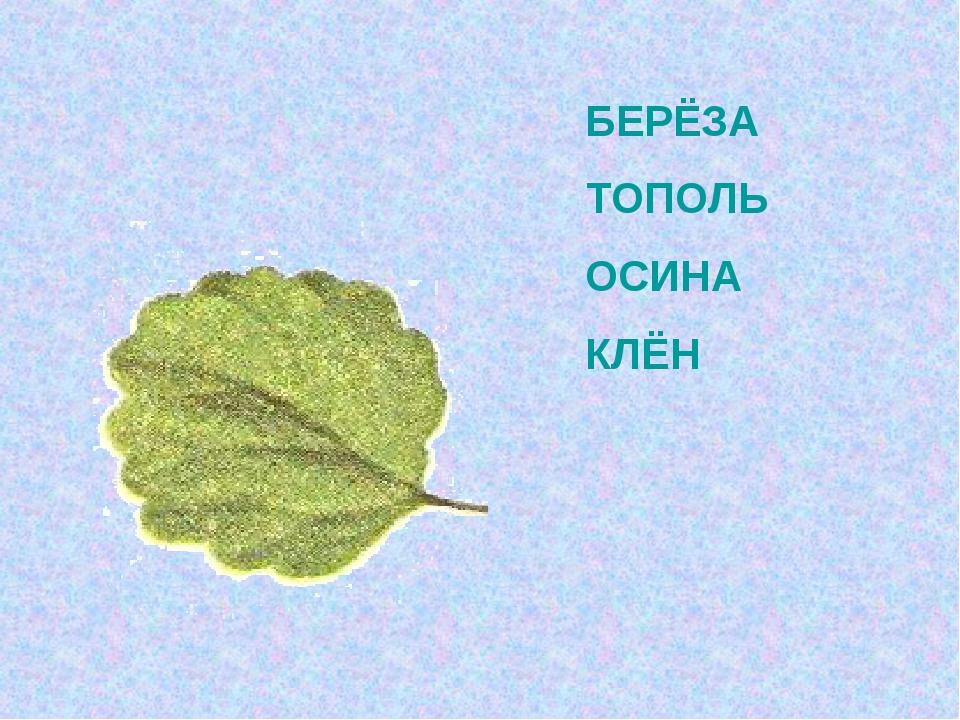 БЕРЁЗА ТОПОЛЬ ОСИНА КЛЁН