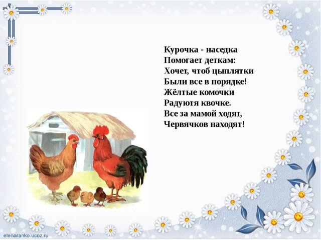 Курочка - наседка Помогает деткам: Хочет, чтоб цыплятки Были все в порядке!...