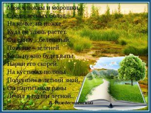 Меж клюквы и морошки, Среди лесных болот, На кочке, на ножке, Куда не глянь р
