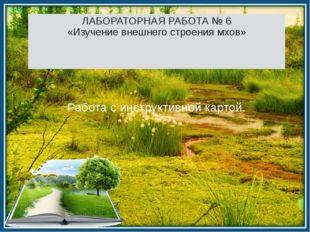 ЛАБОРАТОРНАЯ РАБОТА № 6 «Изучение внешнего строения мхов» Работа с инструктив