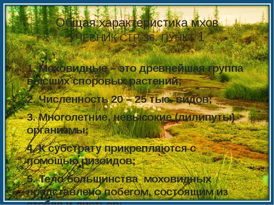 Общая характеристика мхов УЧЕБНИК СТР. 36. ПУНКТ 1 1. Моховидные – это древне...