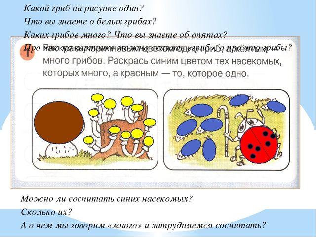 Какой гриб на рисунке один? Что вы знаете о белых грибах? Каких грибов много...