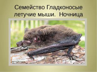 Семейство Гладконосые летучие мыши. Ночница длиннохвостая!!!