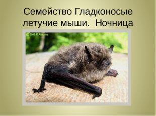 Семейство Гладконосые летучие мыши. Ночница Иконникова!!!
