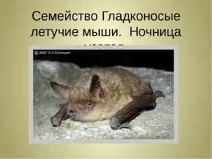 Семейство Гладконосые летучие мыши. Ночница усатая.