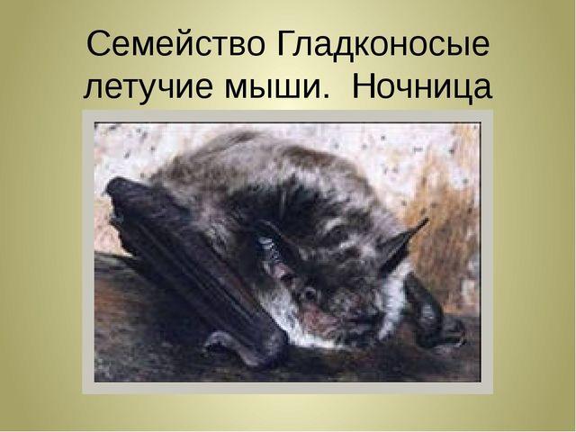 Семейство Гладконосые летучие мыши. Ночница прудовая!!!
