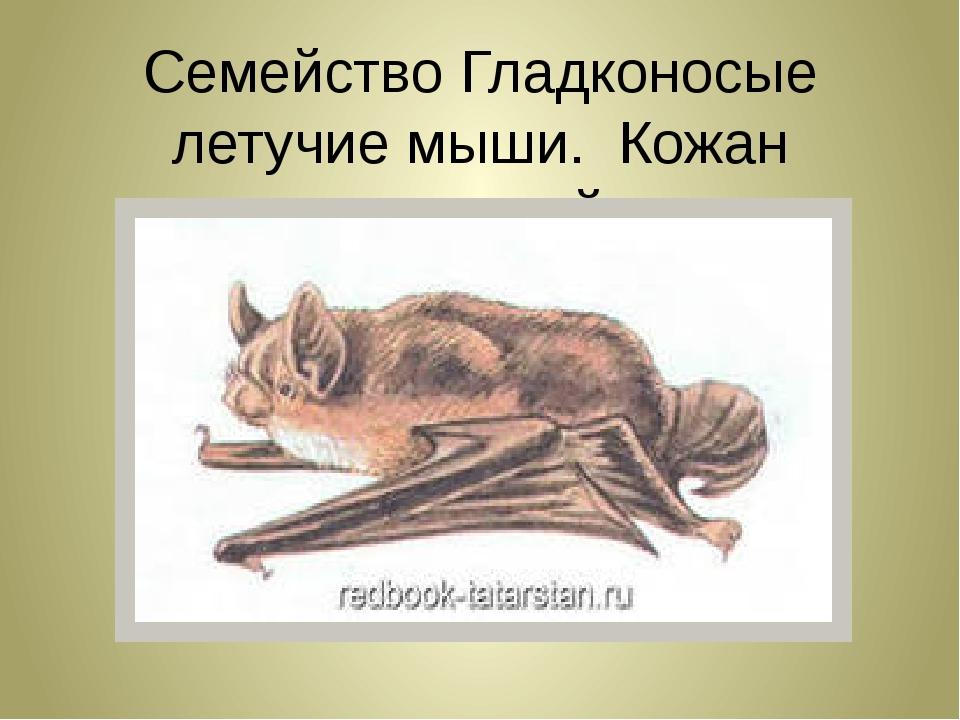Семейство Гладконосые летучие мыши. Кожан северный.