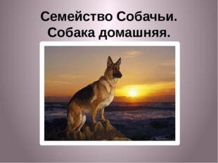 Семейство Собачьи. Собака домашняя.