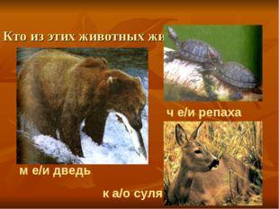 Кто из этих животных живет в лесной зоне? м е/и дведь ч е/и репаха к а/о с