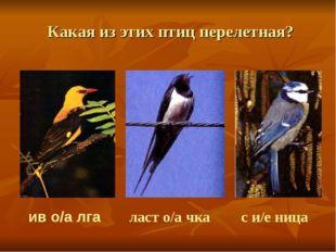 Какая из этих птиц перелетная? ив о/а лга ласт о/а чка  с и/е ница