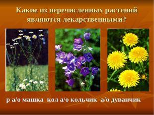 Какие из перечисленных растений являются лекарственными? р а/о машка кол а/о