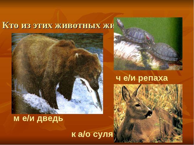 Кто из этих животных живет в лесной зоне? м е/и дведь ч е/и репаха к а/о с...