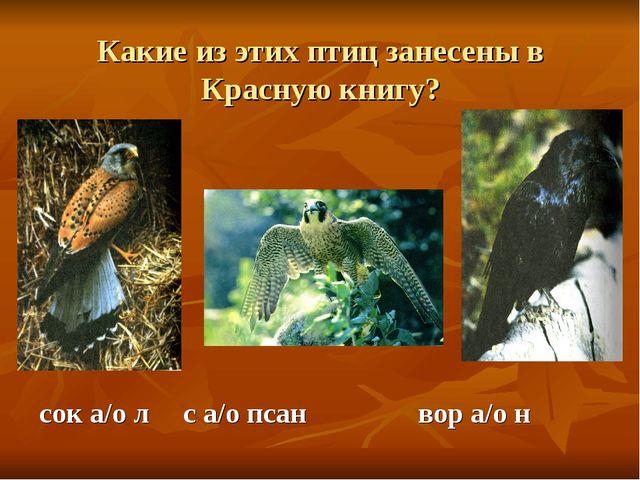 Какие из этих птиц занесены в Красную книгу? сок а/о л  с а/о псанвор а/о н
