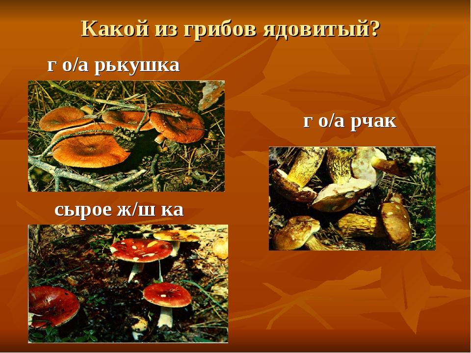 Какой из грибов ядовитый? г о/а рькушка сырое ж/ш ка г о/а рчак