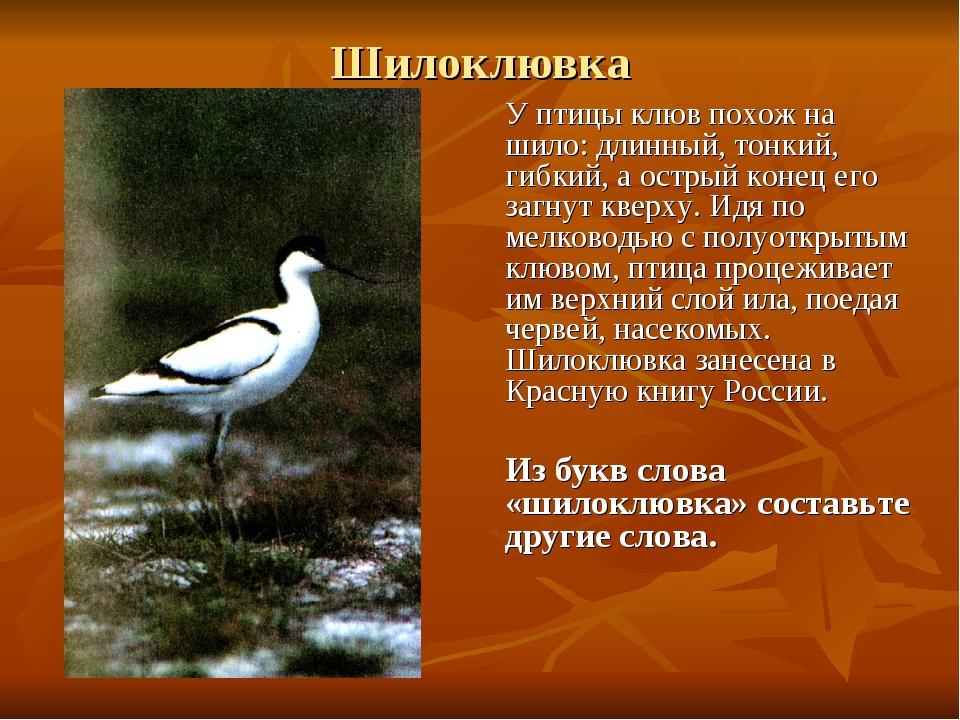 Шилоклювка У птицы клюв похож на шило: длинный, тонкий, гибкий, а острый коне...