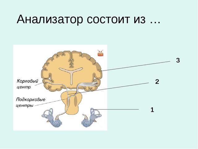 Анализатор состоит из … 1 3 2