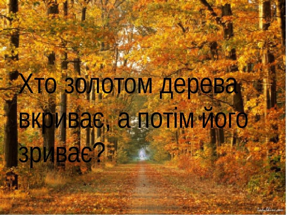 Хто золотом дерева вкриває, а потім його зриває?