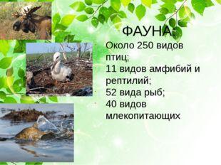 ФАУНА: Около 250 видов птиц; 11 видов амфибий и рептилий; 52 вида рыб; 40 ви