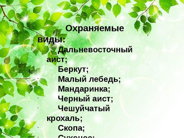 Охраняемые виды: Дальневосточный аист; Беркут; Малый лебедь; Мандаринка; Чер...