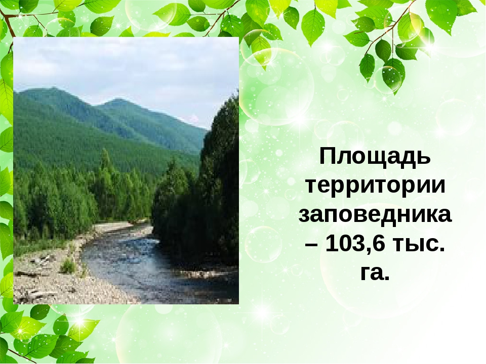 Площадь территории заповедника – 103,6 тыс. га.
